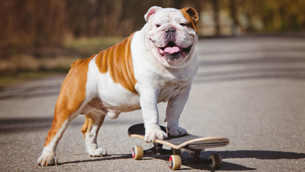 , Dog Behaviors like Aggression and Fearfulness are linked to Breed Genetics- Finds Study