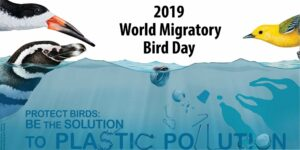 , What is the need for celebrating World Migratory Bird Day?