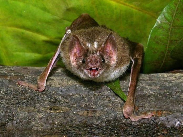 , New Rabid Bat founded in Seal Beach