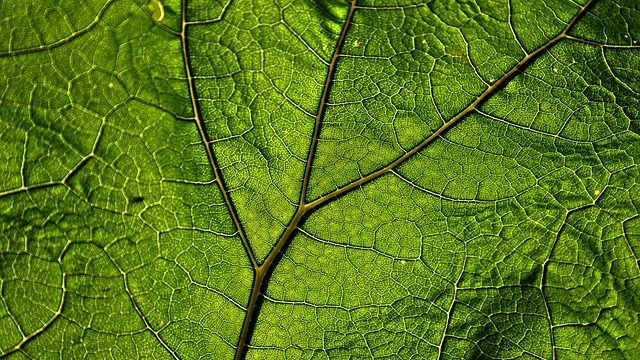 , This Newly Invented Artificial Leaf That Converts CO2 Into Fuel