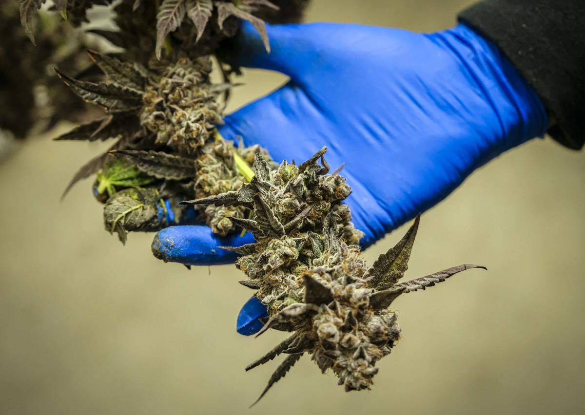 legal cannabis is