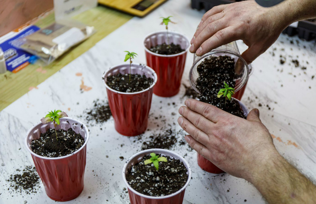 Frustrated With Shortages, Some Illinois Medical Marijuana Patients Begin Growing Their Own at Home