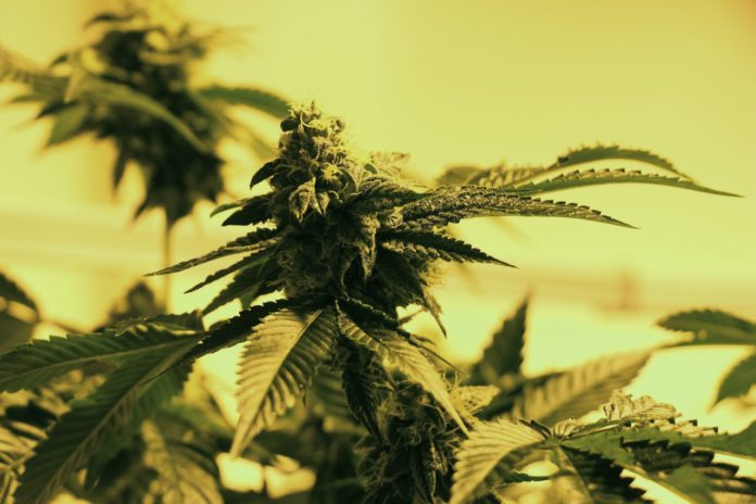 New Jersey senator regards clinical cannabis dispensaries 'basic'
