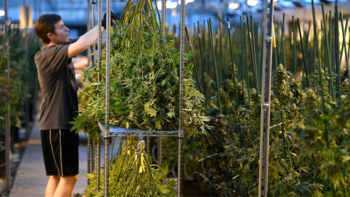 $1 million of legal cannabis is being sold by Illinois on a daily basis