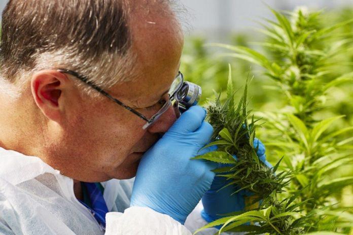 Marijuana firm Vireo Health raises CA$10.5 million
