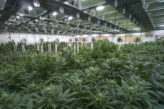Capitol Confidential: COVID-19 could crash New York cannabis sanctioning